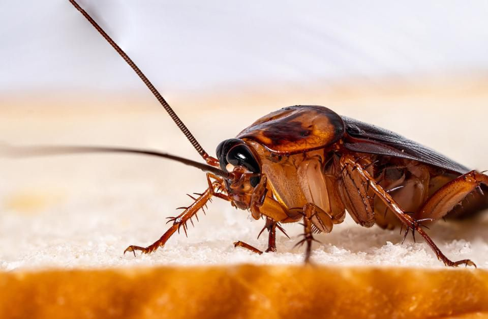 cockroach pest control services
