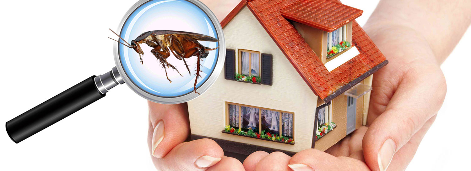 pest control services in hyderabad