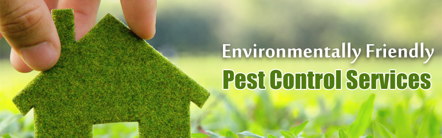 Treating Pests in Stanthorpe, Tenterfield and surrounds